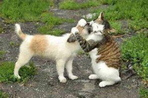 cat_hugging_dog2